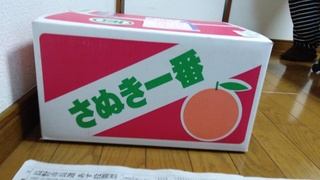 納税(みかん).jpg